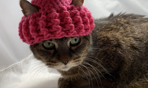 Cari Lam's Handsome Hat For Cats … Free Pattern Alert!