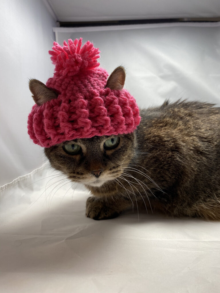 Cari Lam's Handsome Hat For Cats ... Free Pattern Alert!