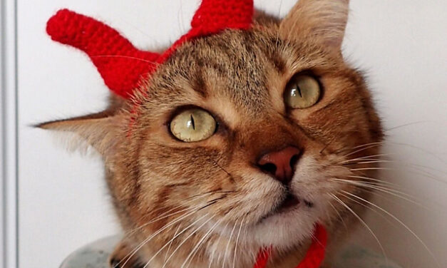 Free Pattern! Crochet a Set Of Devil's Horns For Your Kitty-Cat